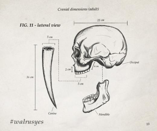 tusk disegno